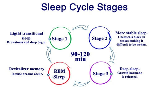 Sleep Cycles